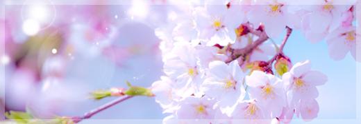 お花見 × 島根県