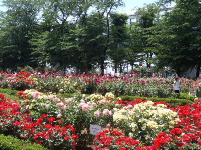 与野公園【お花見】