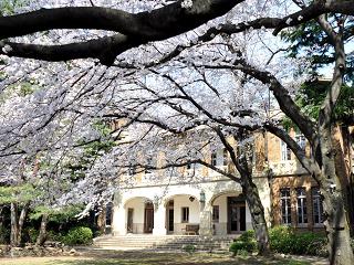 駒場公園【お花見】