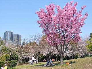 西郷山公園【お花見】