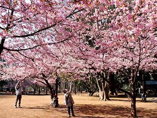 林試の森公園【お花見】