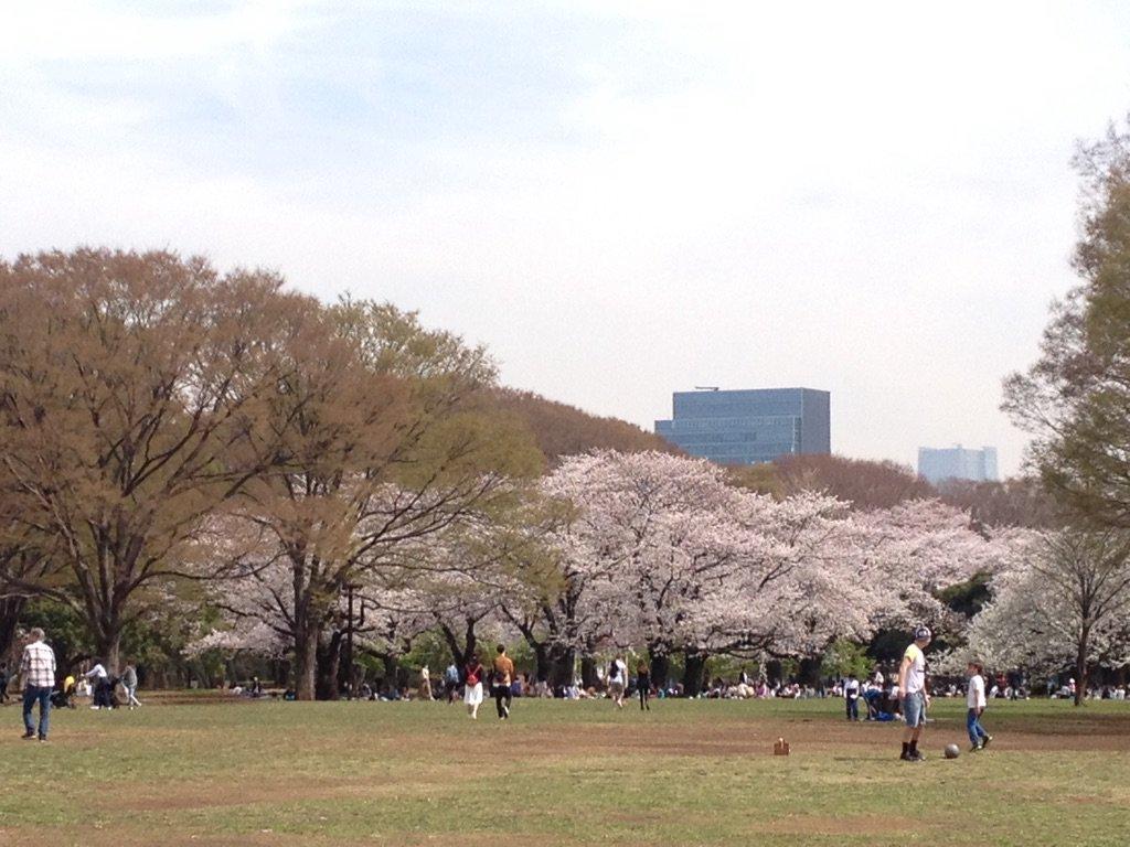 都立代々木公園【お花見】