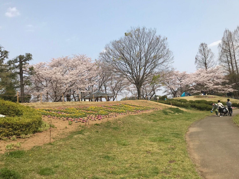 大崎公園【お花見】